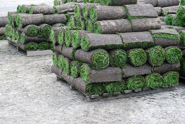 Erbaroll prodotti per il giardino prato verde prato for Prato erboso a rotoli